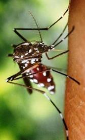 Imagen do dengue