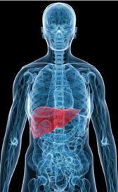Imagen de la hepatite