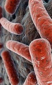 Imagen da sífilis
